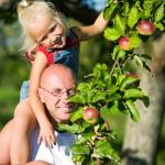 Obstbäume im eigenen Garten anpflanzen